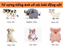 Từ vựng tiếng Anh về các loài động vật - HocHay
