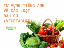 Từ vựng tiếng Anh về các loại rau củ (Vegetables) - HocHay