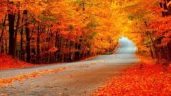 Từ vựng tiếng Anh về mùa Thu (Fall) - Topic tiếng Anh về mùa thu (Fall)