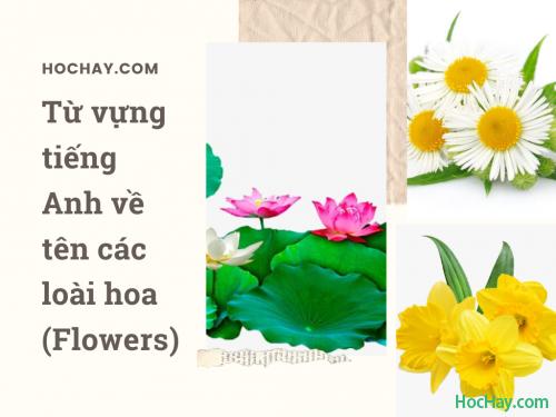 Từ vựng tiếng Anh về tên các loài hoa (Flowers)